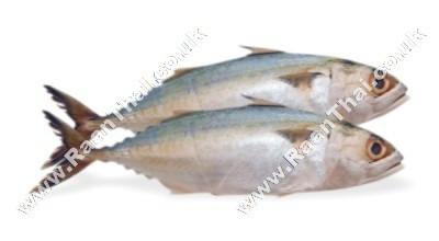 Indian Mackerel - KIM SON/ASIAN SEAS/ASIAN CHOICE