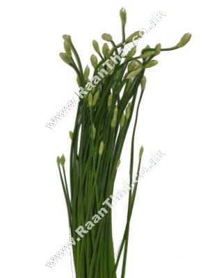 Chinese Chive Flower 200g - !!!!Dok Gui Chai!!!!