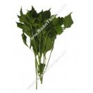 Cumin Leaf 200g - Bai Yee Raa