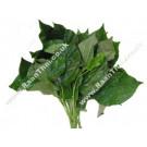 Betel Leaf 200g - !!!!Bai Chaphoo!!!!