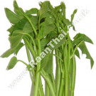 Thai Water Spinach (Thai Morning Glory) 200g - !!!!Pak Bung Thai!!!!