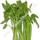 Thai Water Spinach (Thai Morning Glory) 200g - !!!!Pak Bung Thai!!!!