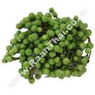 Pea Aubergine (Turkey Berry) 200g - !!!!Makeua Pong!!!!