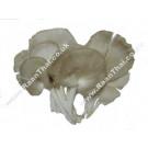 Phoenix Oyster Mushroom 200g - !!!!Hed Naang Far!!!!