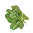Chinese Kale Shoots - Yod Pak Kana