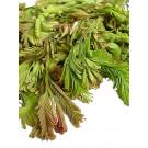 Tamarind Leaf 200g