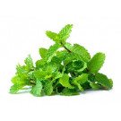 Fresh Mint 60g - Bai Saranae